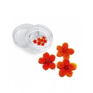 Сухоцветы СЕВЕРИНА (35)